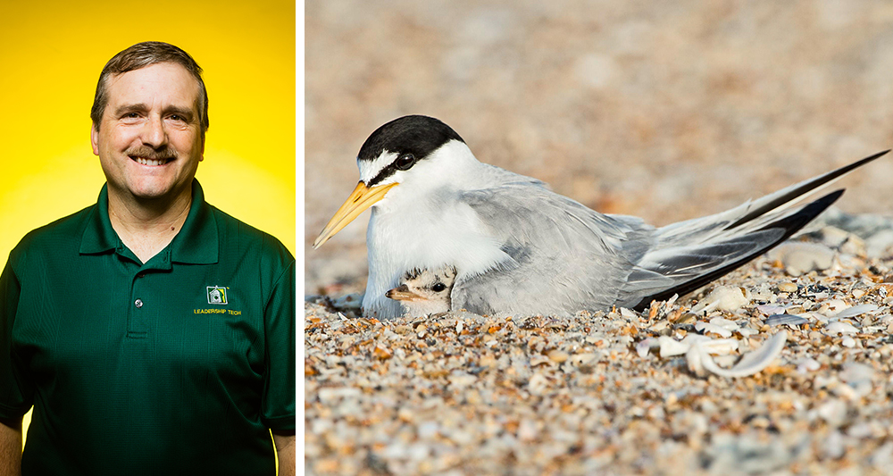 Dr. Tom Nupp and the Interior Least Tern