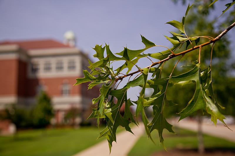 Trees at Arkansas Tech University