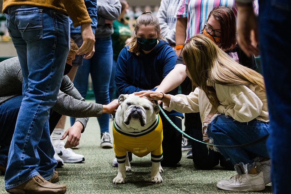 Jerry the Bulldog Time Out for Tech February 2021